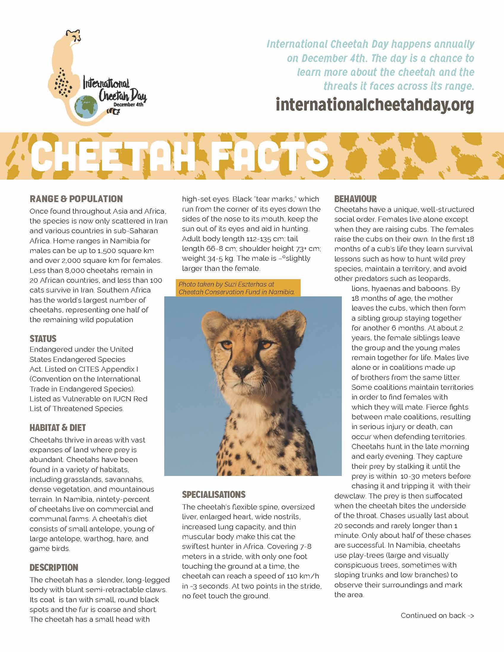 Cheetah Facts - front - International Cheetah Day